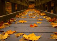 На мокром асфальте осень рисует